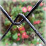 One drop of rain. Drop of rain on the garden fence Stock Photos