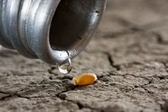 One drop on wheat corn and dry land Royalty Free Stock Photography