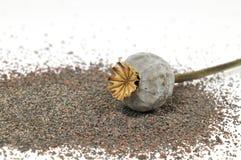 One dry poppy head Stock Photo
