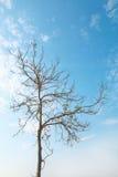 One dry tree on blue sky Royalty Free Stock Photos