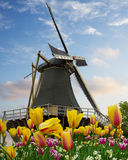 One dutch windmill over  tulips Royalty Free Stock Photos