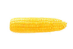 One on ear of corn Stock Image