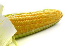 One on ear of fresh corn isolated on a white background. One on ear of corn isolated on a white background stock images