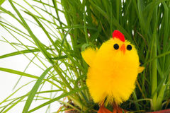One easter chicken in a grass Royalty Free Stock Image