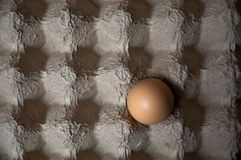One egg in an egg carton. One egg alone in a cardboard egg carton with shadows creating a checkered pattern Stock Images