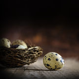 One egg gets out, three eggs stay in the nest, blurred in the da Stock Photography