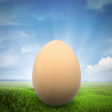 One egg on a green field Royalty Free Stock Photo