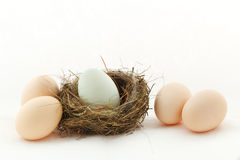 One egg inside the nest and four eggs outside Royalty Free Stock Images