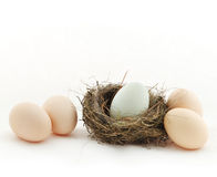 One egg inside the nest and four eggs outside Stock Photography