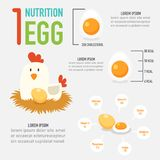 One egg nutrition. Eat one egg nutrition vector stock illustration