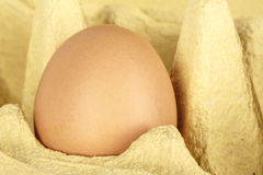 One egg in the packaging Royalty Free Stock Photos