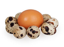 One egg and quail eggs Royalty Free Stock Images