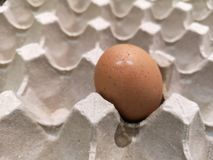 One egg in rack and a little bit dirty royalty free stock photos