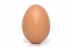 One Egg Standing Royalty Free Stock Photo