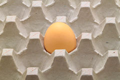 One egg on tray Royalty Free Stock Photo