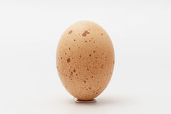 One egg on a white background. One egg with freckles on a white background Stock Image