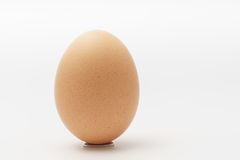 One egg on a white background. One egg on a stand on a white background Stock Image