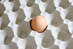 One Eggs that are in the panel. Stock Photography