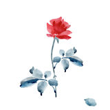 One elegant red rose with a gray leaves on a white background. Watercolor. Royalty Free Stock Image
