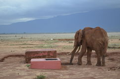 One elephant , Kenya. Elephants looking for water in the savana, Africa, Kenya Stock Photo