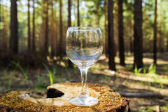 One empty wineglass on a stump on a background of a summer forest. One empty wineglass on a stump on a background of a summer forest in a sunny day Stock Photography