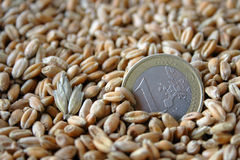 One euro coin among wheat grains. As symbol of agricultural job macro shot Royalty Free Stock Photography