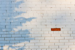 One exceptional red brick on the white brickwall Stock Photography