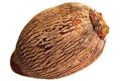 One coconut Stock Photos
