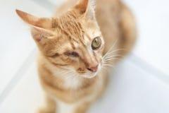 One-Eye Kitten Royalty Free Stock Photo