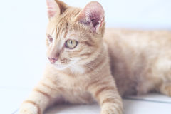 One-Eye Kitten Stock Photography