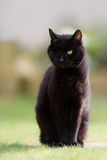 One Eyed Black Cat Sitting Stock Images
