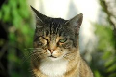 One-eyed Cat. Face of a cat with only one eye due tu cat flu Royalty Free Stock Image