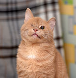 A one-eyed cat Stock Image
