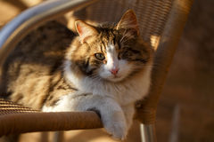 One-eyed cat in sunlight Stock Photography