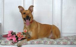 One-eyed dog Stock Images