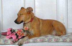 One-eyed dog Royalty Free Stock Photo