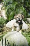One Eyed Dog Posing Royalty Free Stock Photos