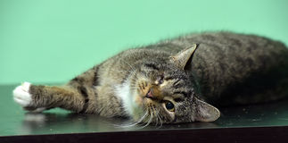 One-eyedtabby cat Stock Images