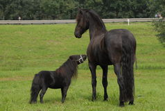 One family, a big and small horse. Are looking at each other Stock Image