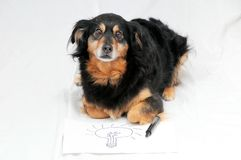 Drawing Dog. One Female Old Black Dog Drawing on a White Paper royalty free stock images