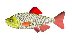 One fish isolate. One fish with red fins illustration isolate vector illustration