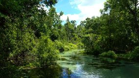 One of Florida`s many springs royalty free stock image