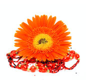 One flower and decoration Royalty Free Stock Images