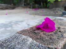 Only one. A flower is lonely Royalty Free Stock Photos