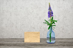One flower a lupine in a glass vase Stock Photo