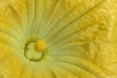 One flower pumpkin Stock Photos