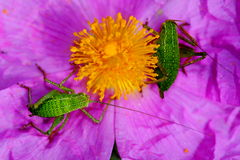 One flower two insects Stock Image