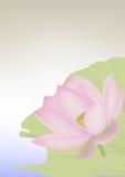 One flowering lotus Royalty Free Stock Image