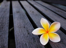 One flowers on wood. Frangipani flowers first on woods royalty free stock images