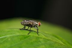 One fly on green leaf for pattern Royalty Free Stock Image